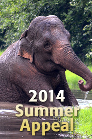 2014 Summer Appeal